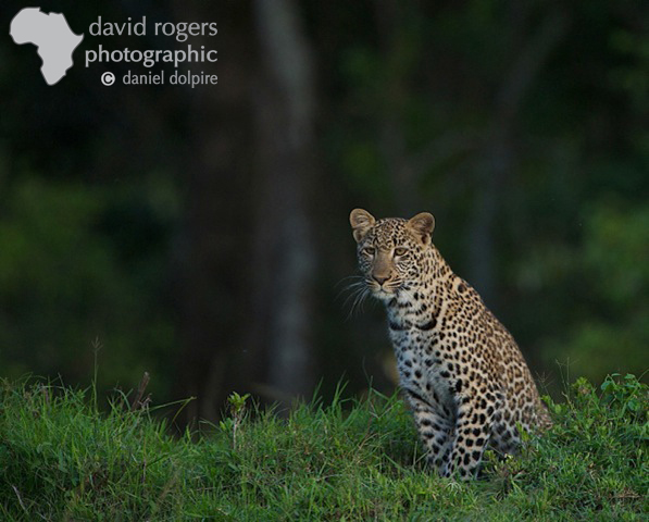 David Rogers Photographic