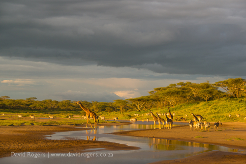 A stunning scene at Lake Ndutu with animals, the light and the landscape all coming together beautifully