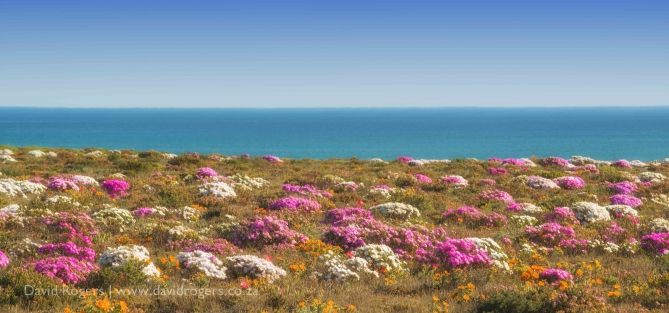 Namaqualand, Spring time flower photographic safari by David Rogers