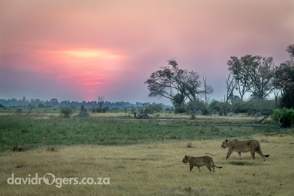 Botswana photographic workshop wit David Rogers